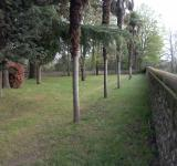 Free Photo - Wall and trees