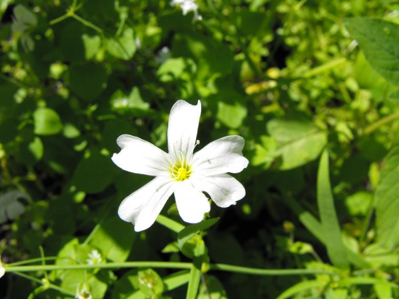 Free Stock Photo of White Flower Created by Kyla M