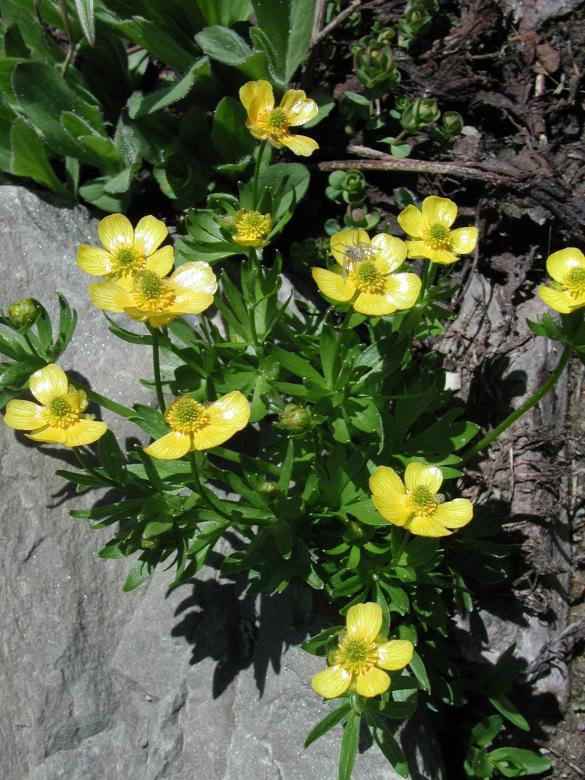 Yellow Mountain Flowers Free Stock Photo By Sue Osborn On