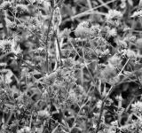 Free Photo - Thistles in an overgrown field