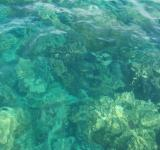Free Photo - Clear Ocean Coral Background