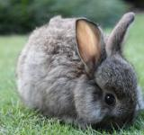 Free Photo - A rabbit eating grass in a garden