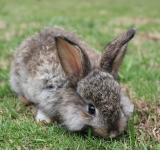 Free Photo - A baby bunny nibbling on fresh grass