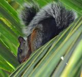 Free Photo - Squirrel in a Palm Tree