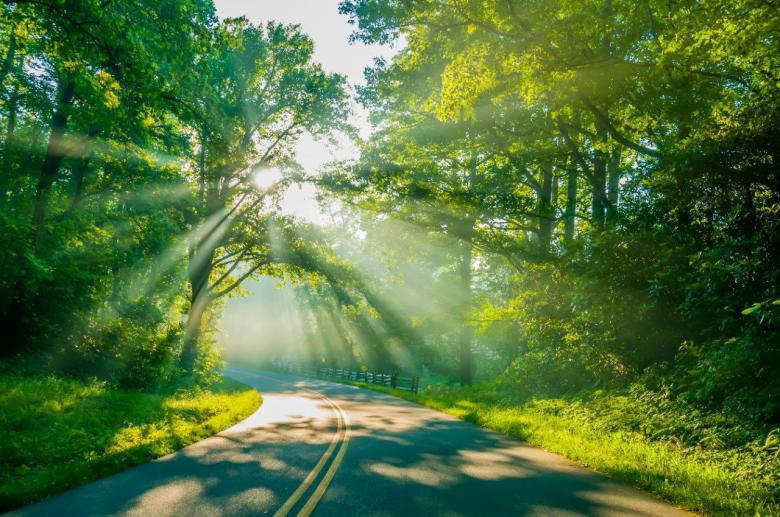 Road through the woods - Free Forest Stock Photos