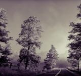 Free Photo - Road through the woods