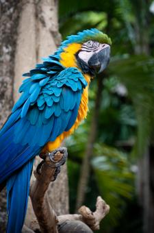 Macaw parrot - Free Stock Photo