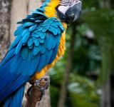 Free Photo - Macaw parrot