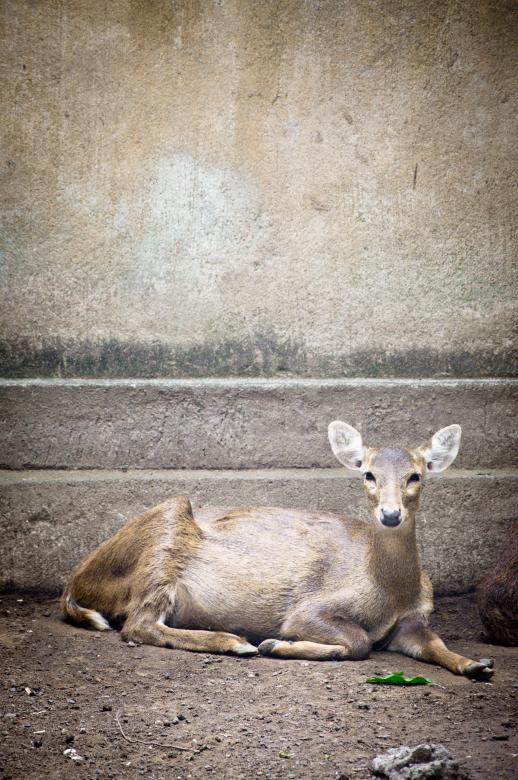 Free Stock Photo of Deer Created by Merelize