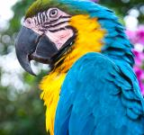Free Photo - Blue and Gold Macaw bird