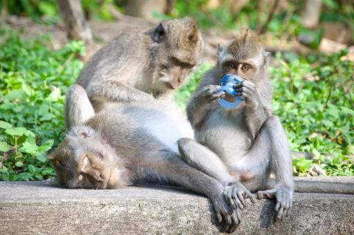 Monkey mother and baby - Free Stock Photo