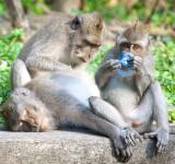 Free Photo - Monkey mother and baby