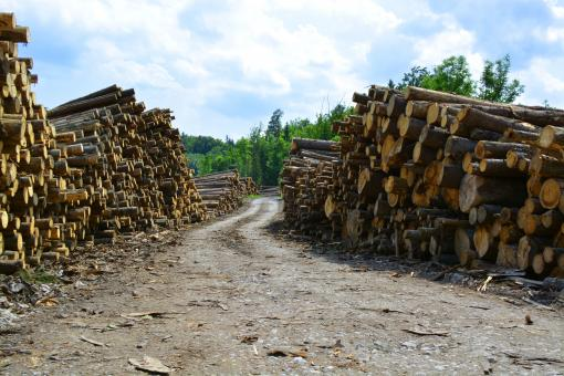 Lots of wood logs - Free Stock Photo