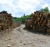 Free Photo - Lots of wood logs