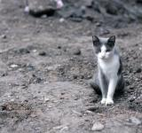 Free Photo - Vagrant cat