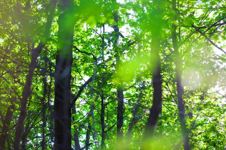 Summer forest - Free Forest Stock Photos
