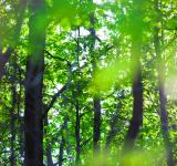 Free Photo - Summer forest