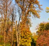 Free Photo - Autumn in the park