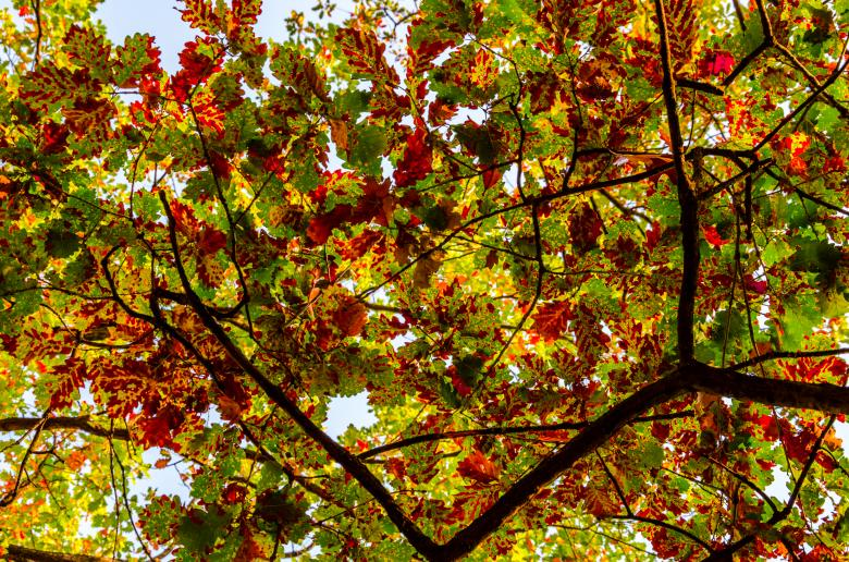 Free Stock Photo of Autumn leafs Created by Octavian