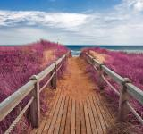 Free Photo - Pink Beach Boardwalk