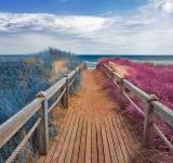 Free Photo - Split Tone Beach Boardwalk - Blue & Pink