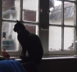 Free Photo - A cat by the window