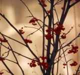 Free Photo - Rowan tree