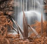 Free Photo - Sepia Waterfall Foliage - HDR