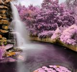 Free Photo - Zoo Waterfall - Ultra Violet HDR