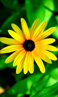 Yellow Flower - Free Stock Photo