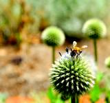 Free Photo - Bee and the flower