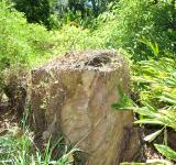 Free Photo - Tree Stump