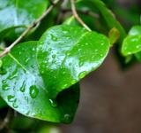 Free Photo - Raindrops on leaves