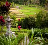 Free Photo - Rice fields