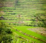 Free Photo - Green Terraced Rice Field