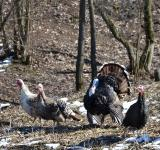 Free Photo - Turkey