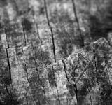 Free Photo - Old wood