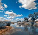 Free Photo - Kruger Park Landscape - Winter Blue