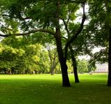 Free Photo - Green lawn in the park