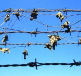 Free Photo - Rusty barbed wire