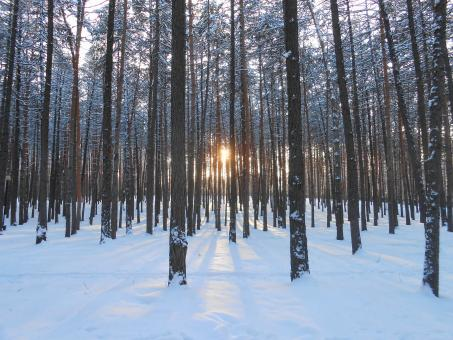 Winter forest - Free Stock Photo