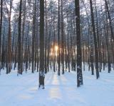 Free Photo - Winter forest
