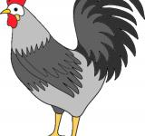 Free Photo - Rooster clipart
