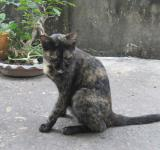 Free Photo - Stray Cat