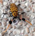 Free Photo - Colorful Beetle