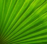 Free Photo - Abstract Green Palm Leaf Background