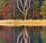 Free Photo - Lake reflection