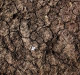 Free Photo - Cracked Mud Texture