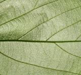 Free Photo - Green Leaf Texture