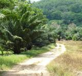 Free Photo - Tropical Dirt Road